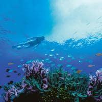 Snorkel One&Only Hayman