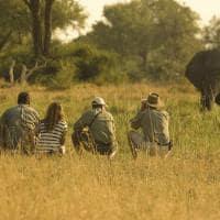 African bush camps khwai bush camp safari