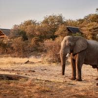 elefante belmond savute elephant lodge