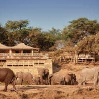 elefantes belmond savute elephant lodge