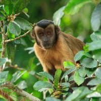 Cristalino lodge macaco prego das guianas