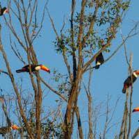 Pousada trijuncao tucanos