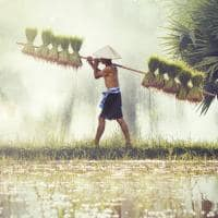 Fazendeiro em plantação de arroz
