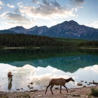 Animais Banff National Park