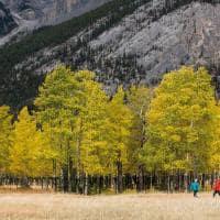 Outono Banff National Park