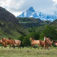 Explora patagonia cavalos