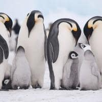 família pinguim Quark expedition
