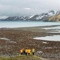observação pinguins Quark expedition