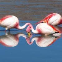Travessia uyuni flamingos