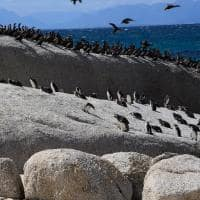 Boulders Beach e Cape Point, África do Sul