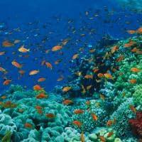 mergulho Four Seasons Sharm el-Sheikh