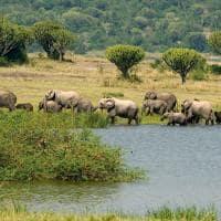 Família de elefantes de Uganda