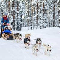 Trenó de cães husky - Lapônia, Finlândia.