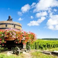 Franca borgonha vinicola