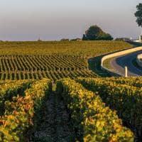 Route des chateaux vinha no medoc prestigioso vin cola do vinho de bord us fran a