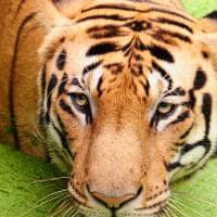 Pacote Índia: Tigre de Bengala, Reserva de Animais, Parque Nacional