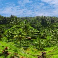 Terraço arroz Jatiluwih, Ubud, Bali