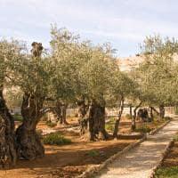 Jardim oliveira