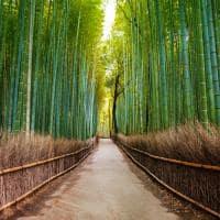 floresta de bambu, Arashiyama, Quioto, Pacote Japão