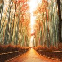 Floreta bambu quioto