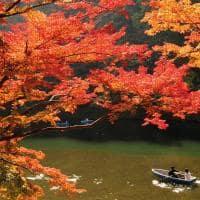 Outono em quioto