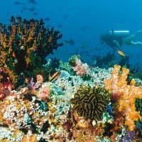 baros maldives mergulho