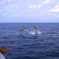 Cruzeiro com golfinho no Six Senses Laamu, Maldivas