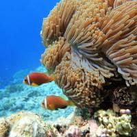 Raffles maldives meradhoo vida marinha