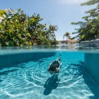 Palmaia the house of aia piscina