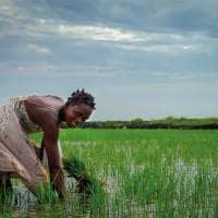 Mocambique plantacao arroz