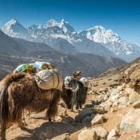 Viagem Himalaia turismo Nepal