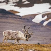 Quarkexpeditions spitsbergen vida selvagem