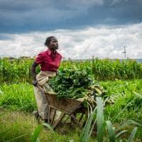 Agricultura do Quênia