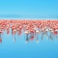 Flamingos ponto turístico Lago Nakuru Quênia