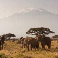 Monte Kilimanjaro, Quênia