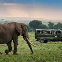 Safári no Masai Mara