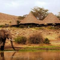Tortilis Camp elefantes