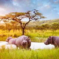 Ruanda hipopotamo akagera