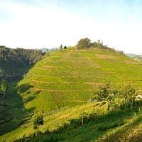 Ruanda plantacao cha