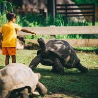 Raffles seychelles tartaruga