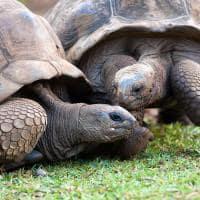 Tartarugas do La Vanille Reserve Park