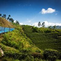 Atividades passeios trem Nuwara Eliya, Kandy