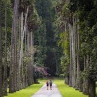 Jardim Botânico Peradeniya, Kandy, Sri Lanka