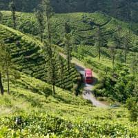 Plantações chá Sri Lanka