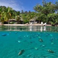 peixes - InterContinental Resort and Spa Moorea