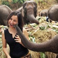 Beijo elefante