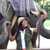 Elefantes, Atrações Turísticas, Viagem Tailândia