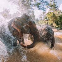Elefantes banho