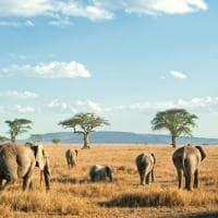 Elefantes safári Serengeti, Tanzânia