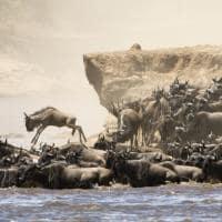 grande migração gnus Tanzânia